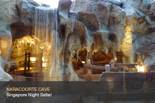NARACOORTE CAVE @Singapore Night Safari
